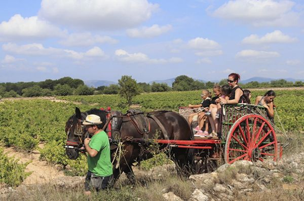 ROUTE IN CARRIAGE BETWEEN VINEYARDS AND WINE TASTING