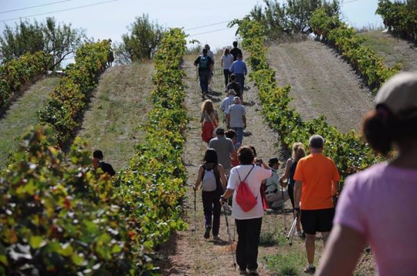 Escapada Walk and Wine al teu Aire